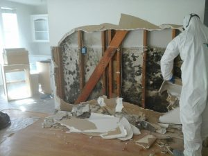 4 Benefits Of Hiring A Professional Mold Removal Service In San Diego
